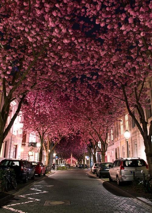Heerstrasse-Bonn-Germany